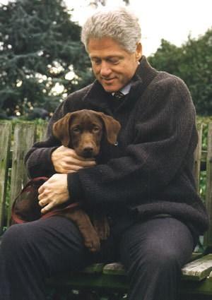 Bill Clinton mit einem seiner Labradore