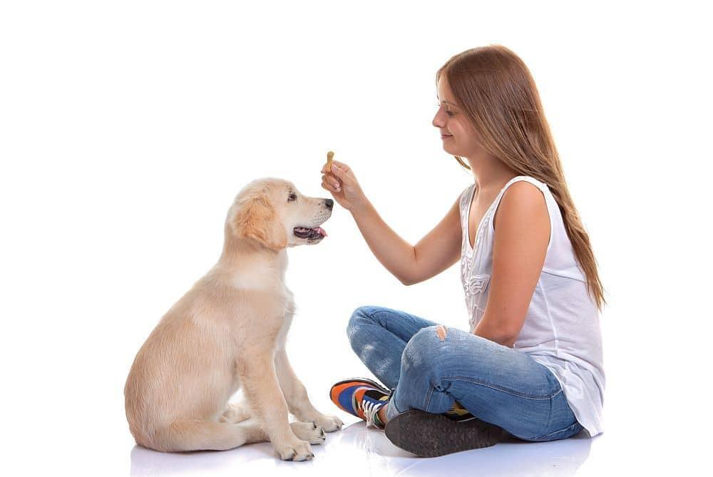 Labrador Training, Labrador Erziehung