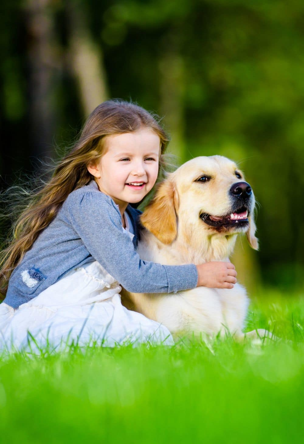 Labrado Familienhund