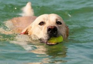 Labrador Wasser