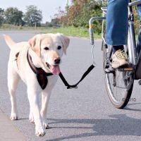 Hundeleine Fahrrad Labrador