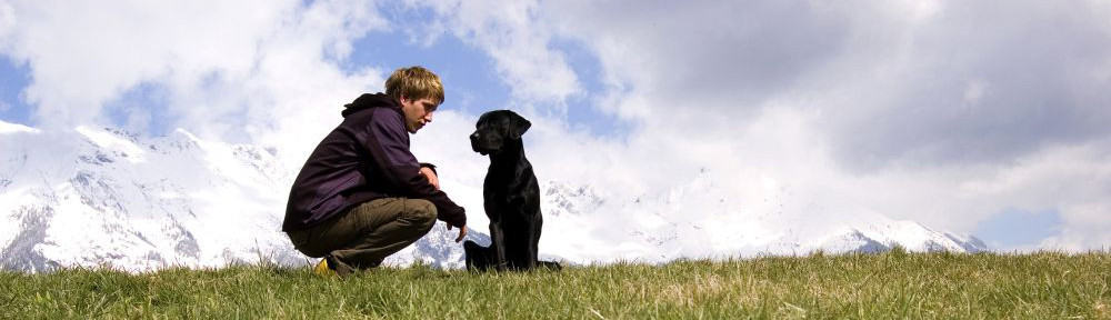 Top-Labrador-Spaziergang.jpg