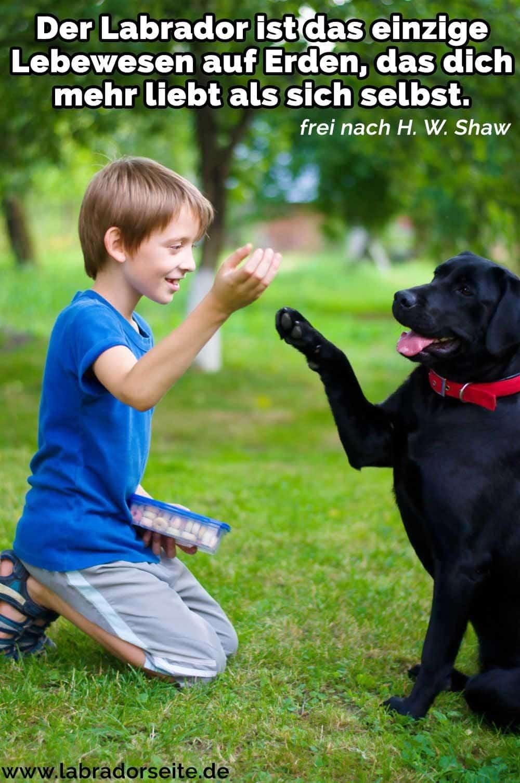 Ein Kind spielt mit seinem Labrador