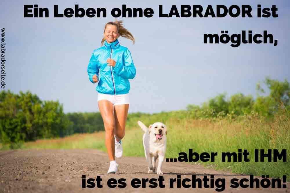 Eine Frau und ihr Labrador Jogging