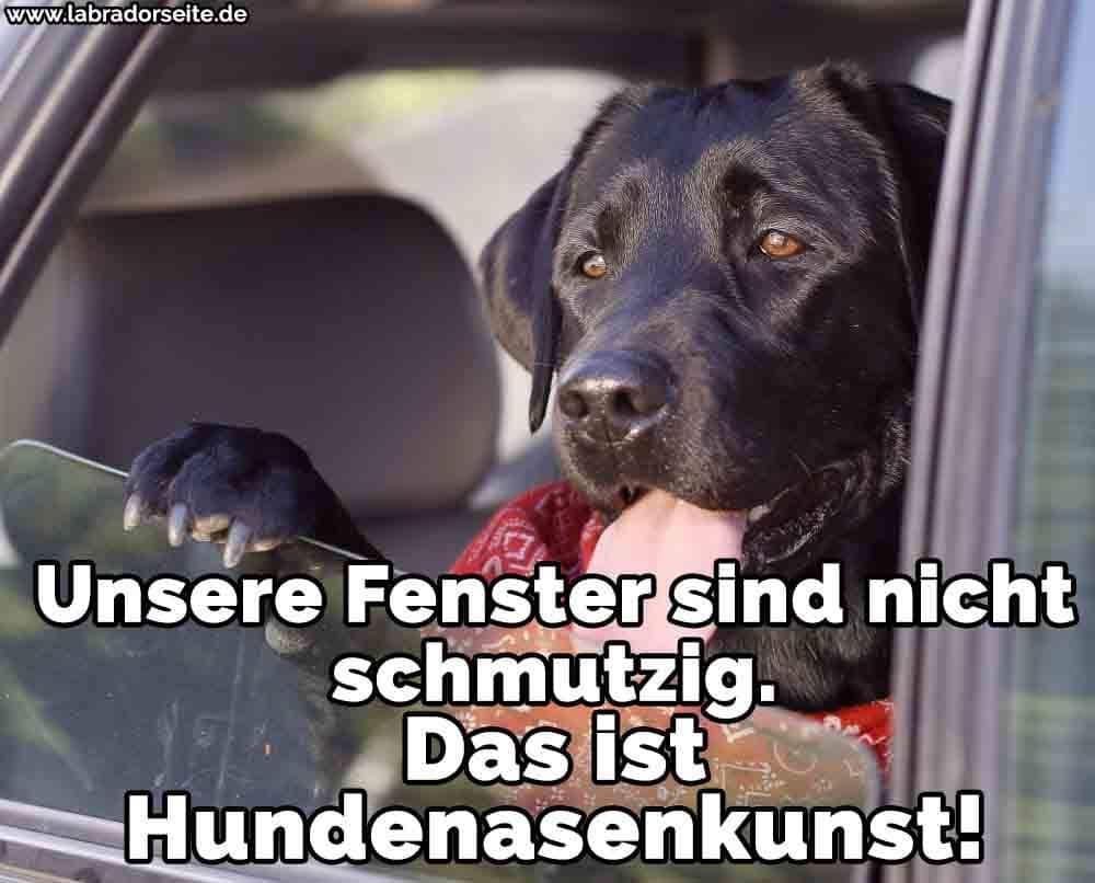 Ein Labrador in dem Autofenster