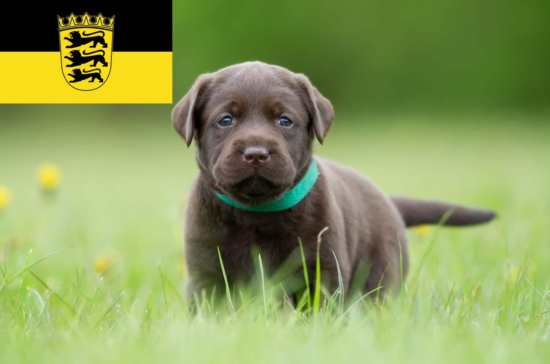 Labrador Züchter und Welpen in Baden-Württemberg