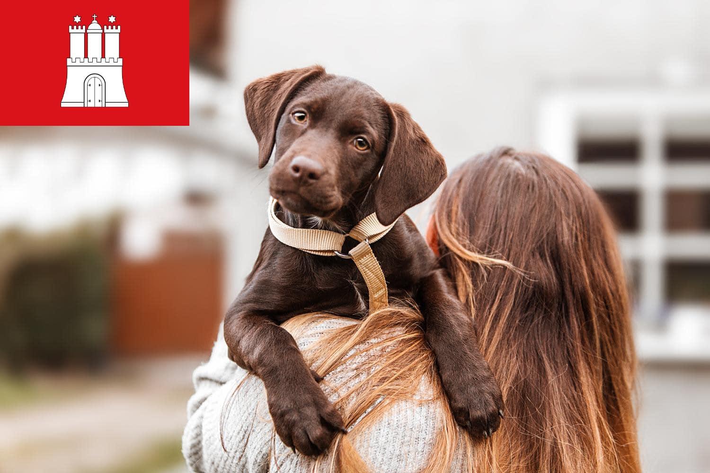 Labrador Züchter und Welpen in Hamburg