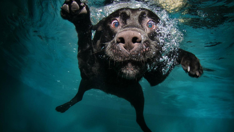 Labrador Fotos und Bilder