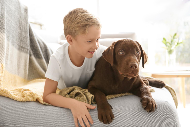 Charakter und Wesen des Labradors