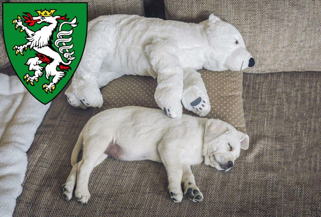 Labrador Züchter und Welpen in Graz - LabradorSeite.de